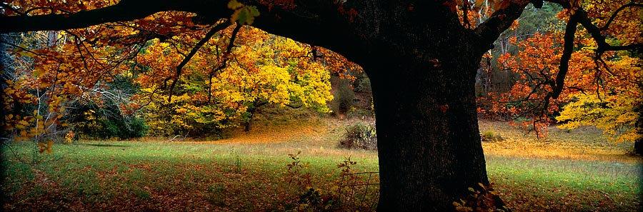 Autumn tree colours, Bright, Victoria, Australia