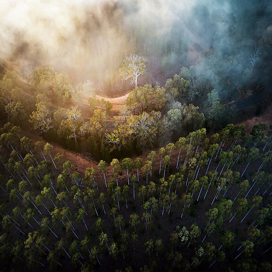 Nannup Morning Fog