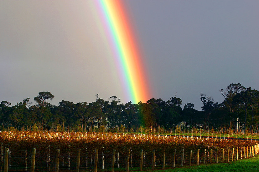 Rainbow at a winery, Margaret River,  South Western Australia