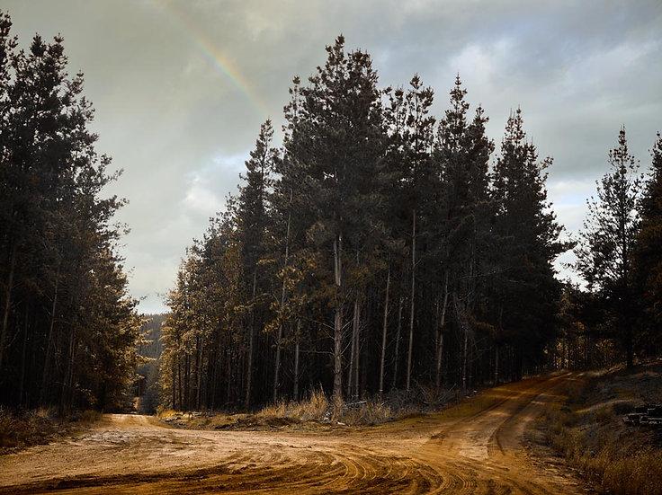 Nannup Pine Plantation, South Western Australia