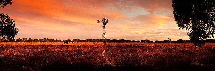 Farm Land with windmill