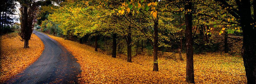 Country Road in autumn, Victoria, Australia