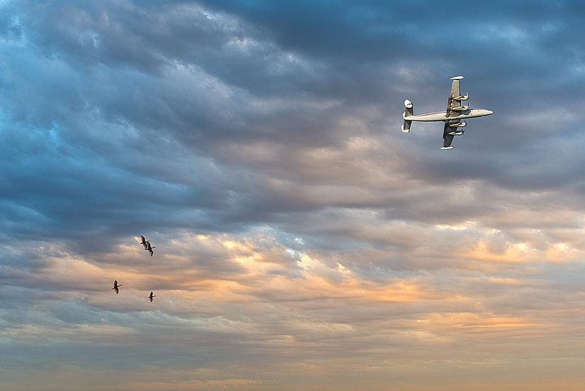 Plane, Birds and Skies