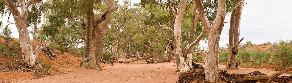Dry creek bed and gum trees, South Australia