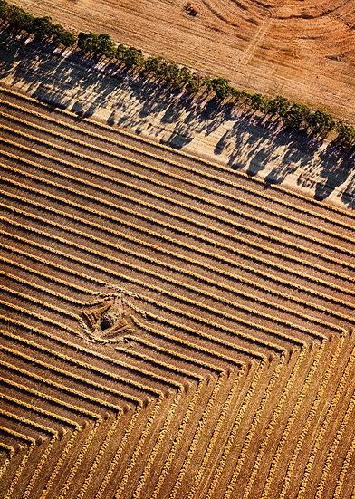 Pasture South Western Australia
