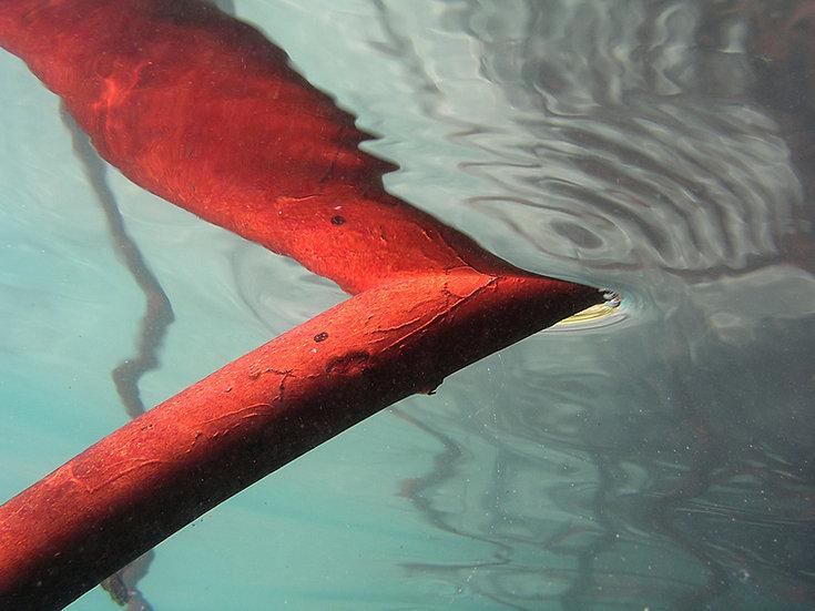 Mangrove Reflections I