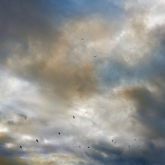 Flock of birds, Redgate Beach, South Western Australia