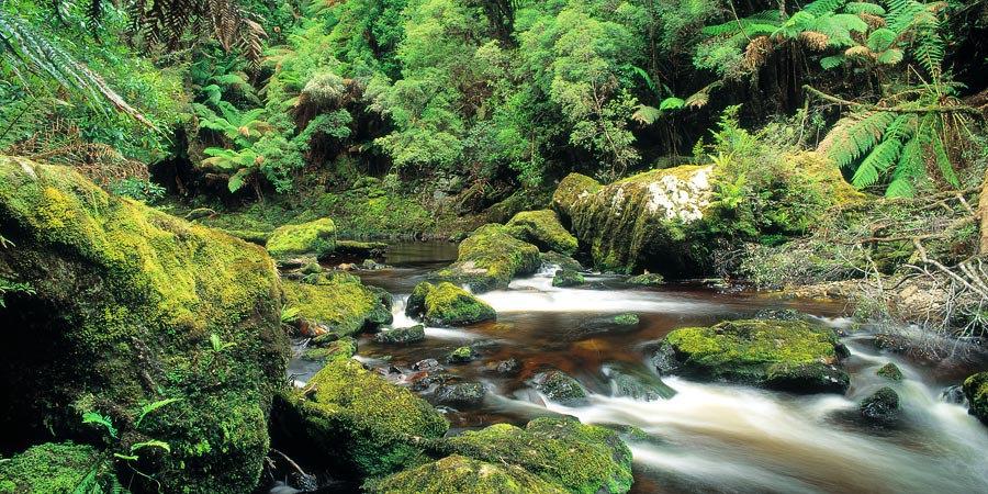 River rapids, Bird River, Tasmania, Australia