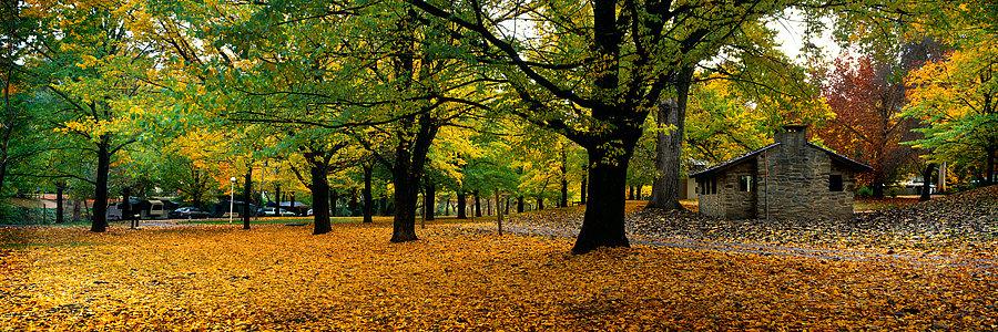Autumn trees and stone cottage, Victoria, Australia