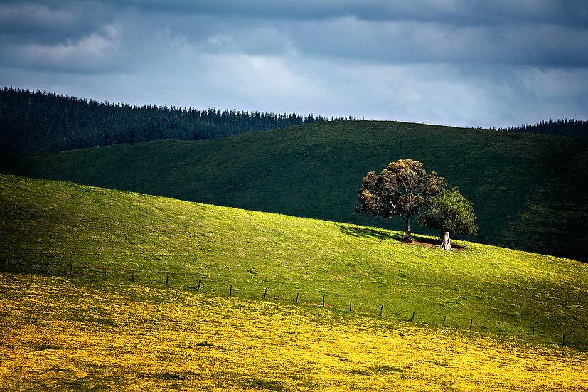 Nannup Farmland, South Western Australia