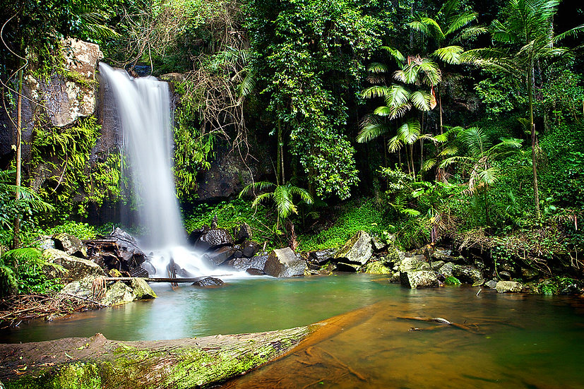 Curtis Falls, Gold Coast Hinterland, Queensland, Australia