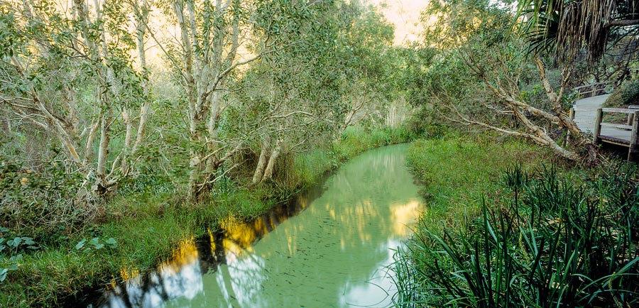 Eli Creek and boardwalk, Fraser Island, Queensland, Australia