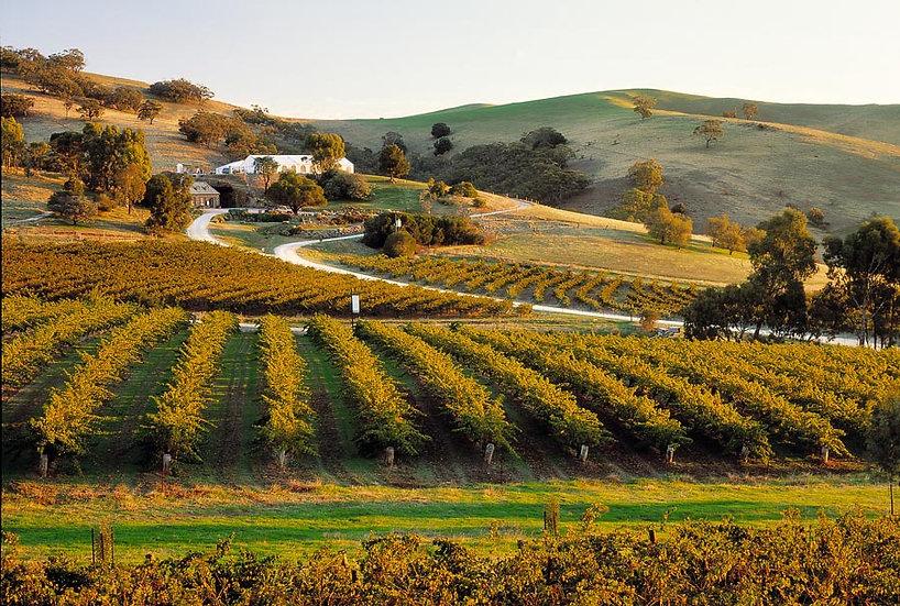 Winery, The Barossa Valley Australia