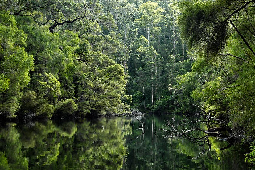 River and Forest, Nannup, Western Australia