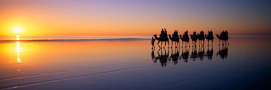 Camels, Cable Beach, Broome, Kimberley, North Western Australia