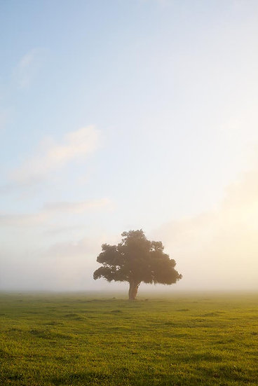 Misty Morning, Quindalup, Dunsborough, South Western Australia