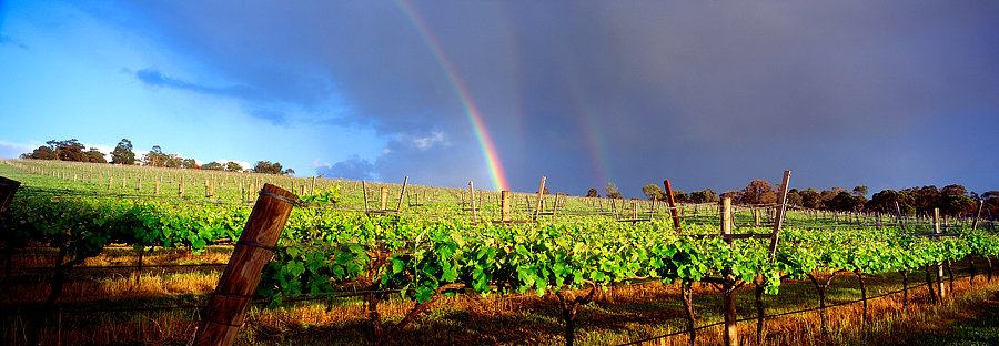 Rainbow above the grape vines, winery, Margaret River, South Western Australia