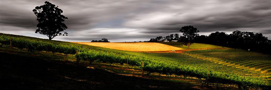 Jarrah Jacks Winery, Pemberton, South Western Australia