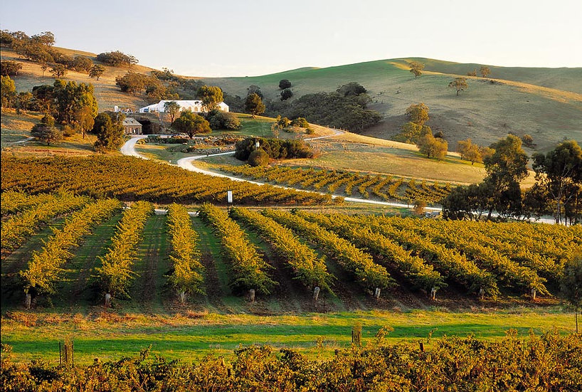 Grape Vines,Winery, Barossa Valley, South Australia