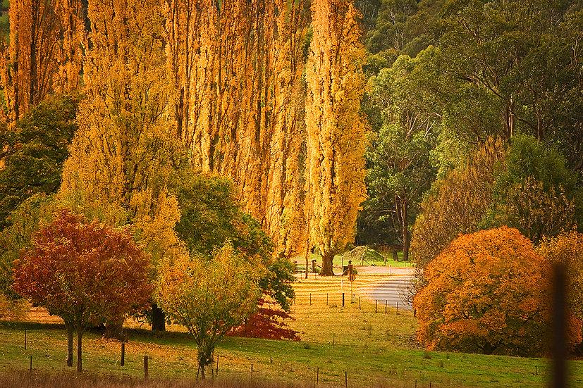 Autumn in Bright, Victoria, Australia