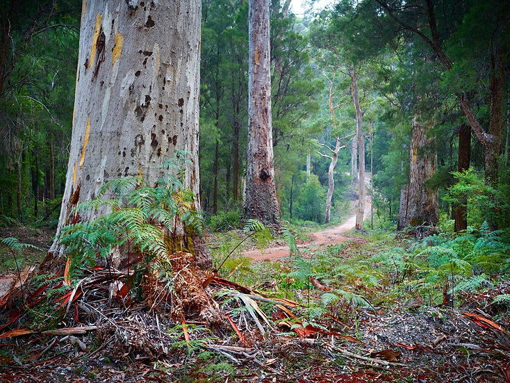 Forest and Country Road, South Western Australia