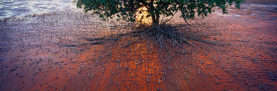 Mangroves, Broome, Kimberley, North Western Australia