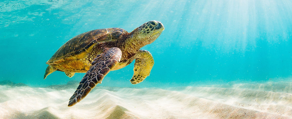 photo%20of%20Sea%20turtle%20in%20the%20G