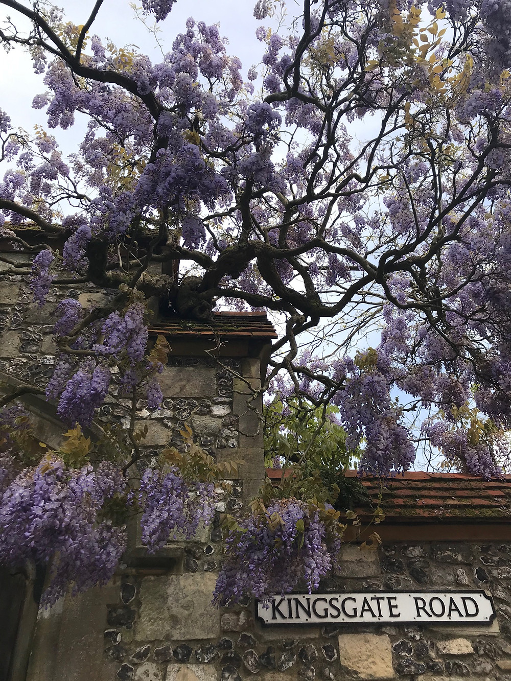 Wisteria by Winchester College