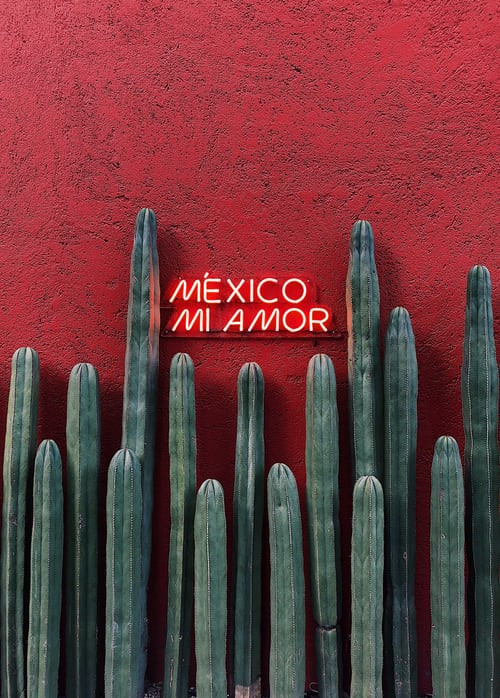 Dahlias originate from Mexico.