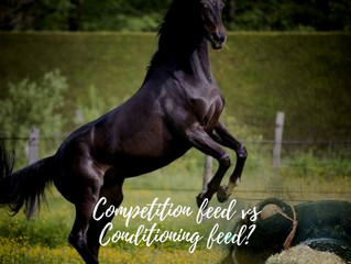 Competition feed? Conditioning feed? Why does a performance feed feel so scary?