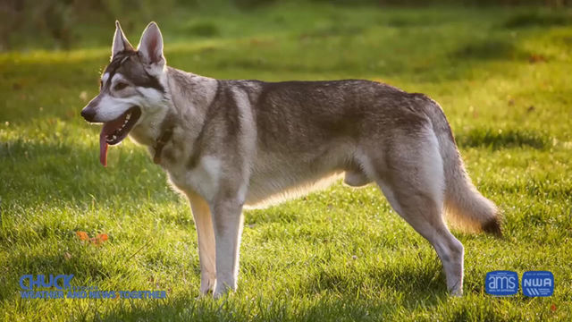NORTHERN INUIT