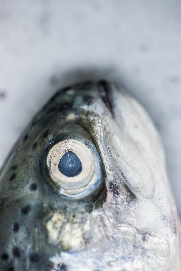 "Food-Fotografie ""Fisch und Salz"", Stefan Schmidlin Fotograf Basel; Bild 1.jpg"