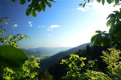 Tropique des Vosges