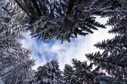 Au Milieu de la Forêt