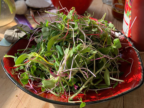 A bright plate of mixed microgreens for amazing flavour and nutrition as a salad or garnish.