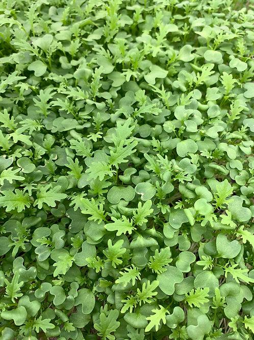 Green Frills Mustard 30g