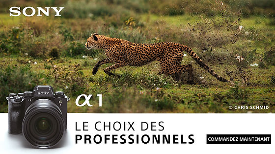 311-12 CHAT_DI_Alpha1_POS_Banner_Cheetah_1920x1080 CHFR.jpg