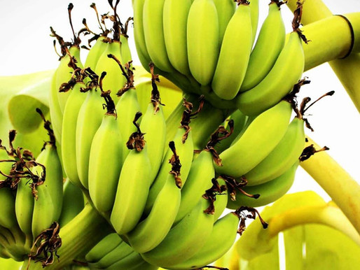 Pode comer Banana Verde na Dieta Low Carb?