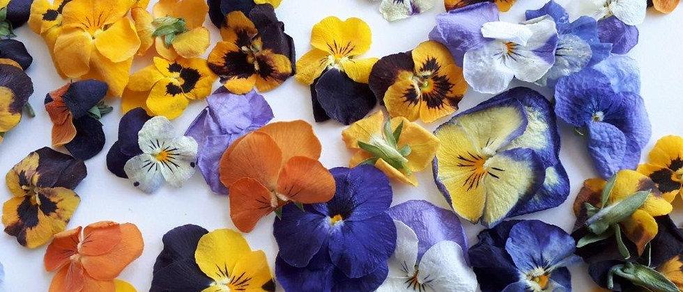 פרחי אמנון ותמר מיובשים