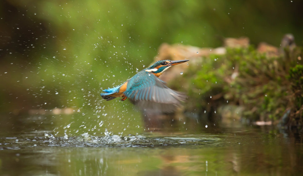 photo-of-common-kingfisher-flying-above-