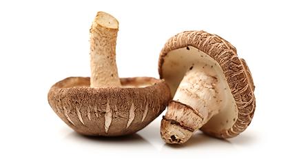shiitake-mushroom-anti-cancer-benefits.p