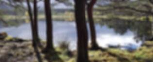 Skottimetsälampi2.jpg