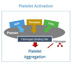 Platelet Activation Receptor Sites