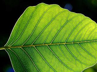 Leaf_1_web.jpg