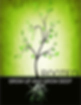 Rooted - Cover.jpg