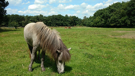 Kinderfeestje Pony Pensionstal Stal Happy Horse