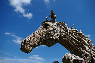 horse-2641408_960_720.jpg