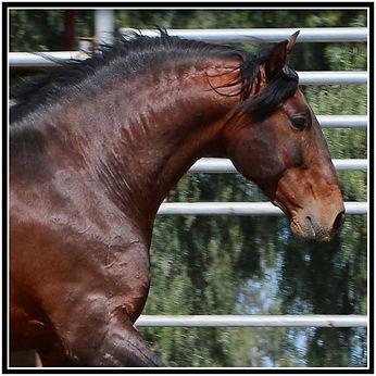 Yummy Head 2 stallion.jpg