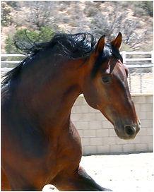 Yummy Head 3 stallion.jpg