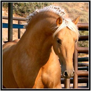 Morante head shot 1 stallion.jpg